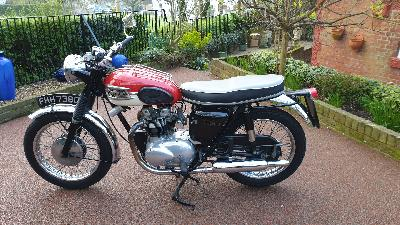 66 Triumph Speed Twin